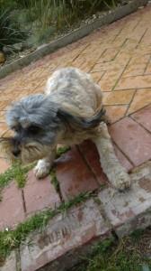 5_happy park dog