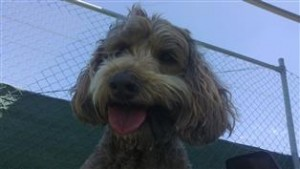 dog behaviorist love dogs like this