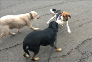 dog behavior problems anxiety