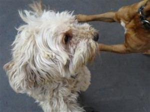 dog behavior aggression