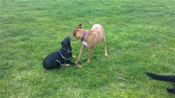 dog desire to run
