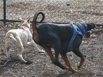 protective dogs dog behavior