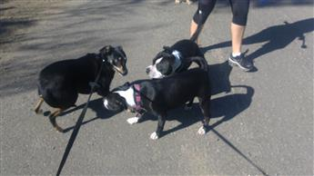 dog behavior neediness dependence