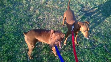 difficult to train dogs often about dog behavior
