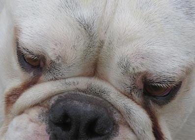 dog treats online