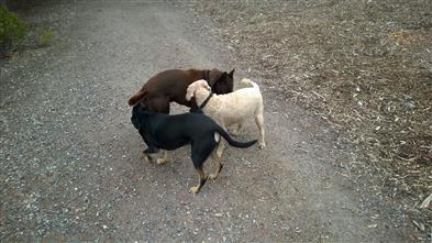 dog-begging must-stop