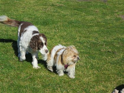 two dogs NOT aggressive !